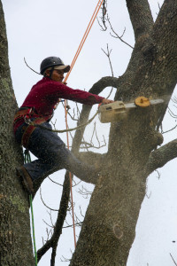 peters-todds-tree-services-03
