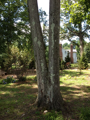 tree services cabling and bracing